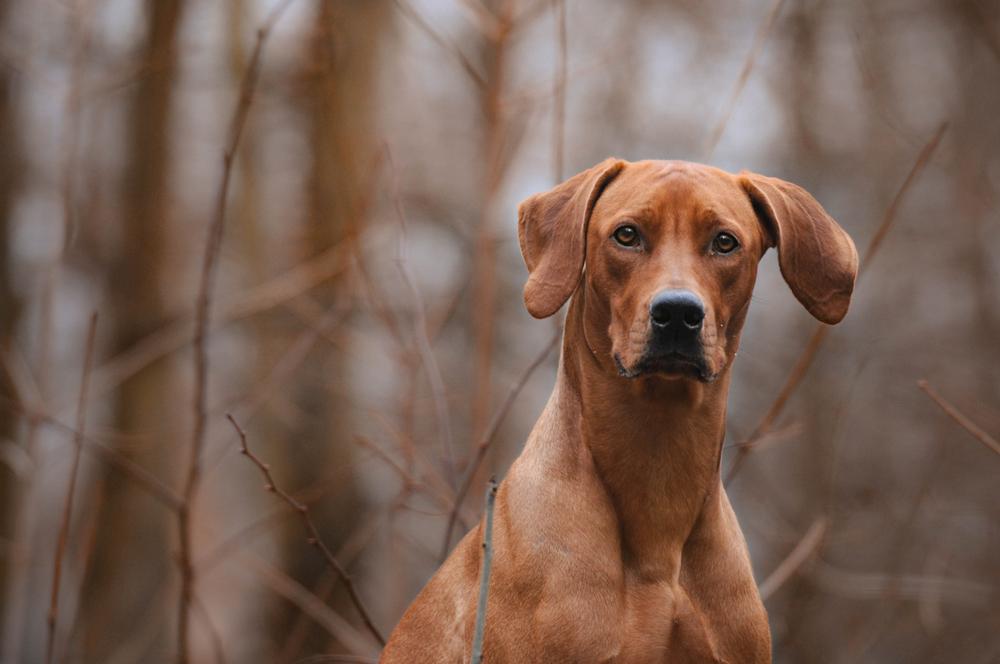 Hondenvoer kopen, waar moet je op letten?