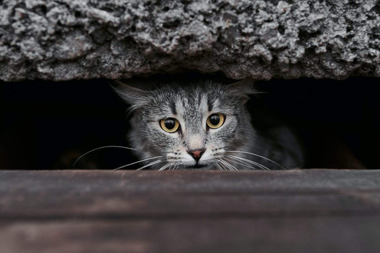 KVV kat, voor een lang en gezond leven