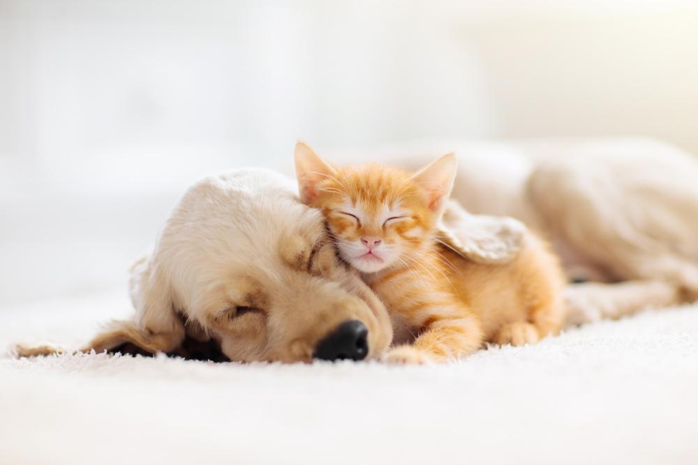 Kattenverzekeringen vergoeden vaak een groot deel